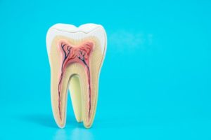 anatomy of a tooth against a light blue background